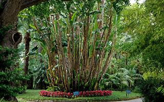 Uno scorcio del parco botanico del design hotel a Sorrento.